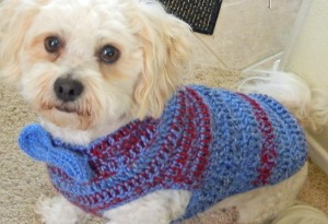 Crochet Pet Sweater with Bow Tie for small to medium dogs.